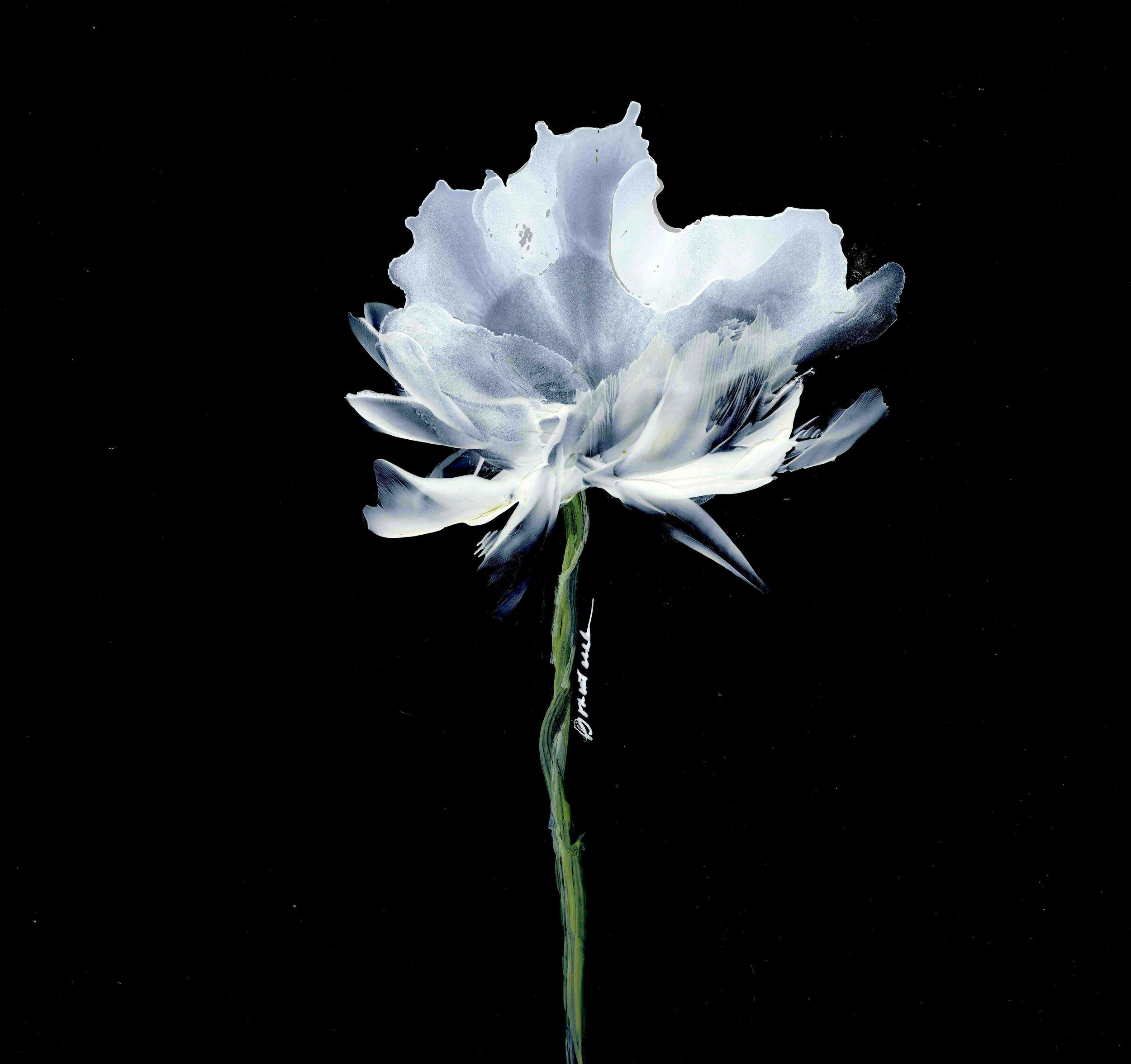 Simple White Bloom.jpg