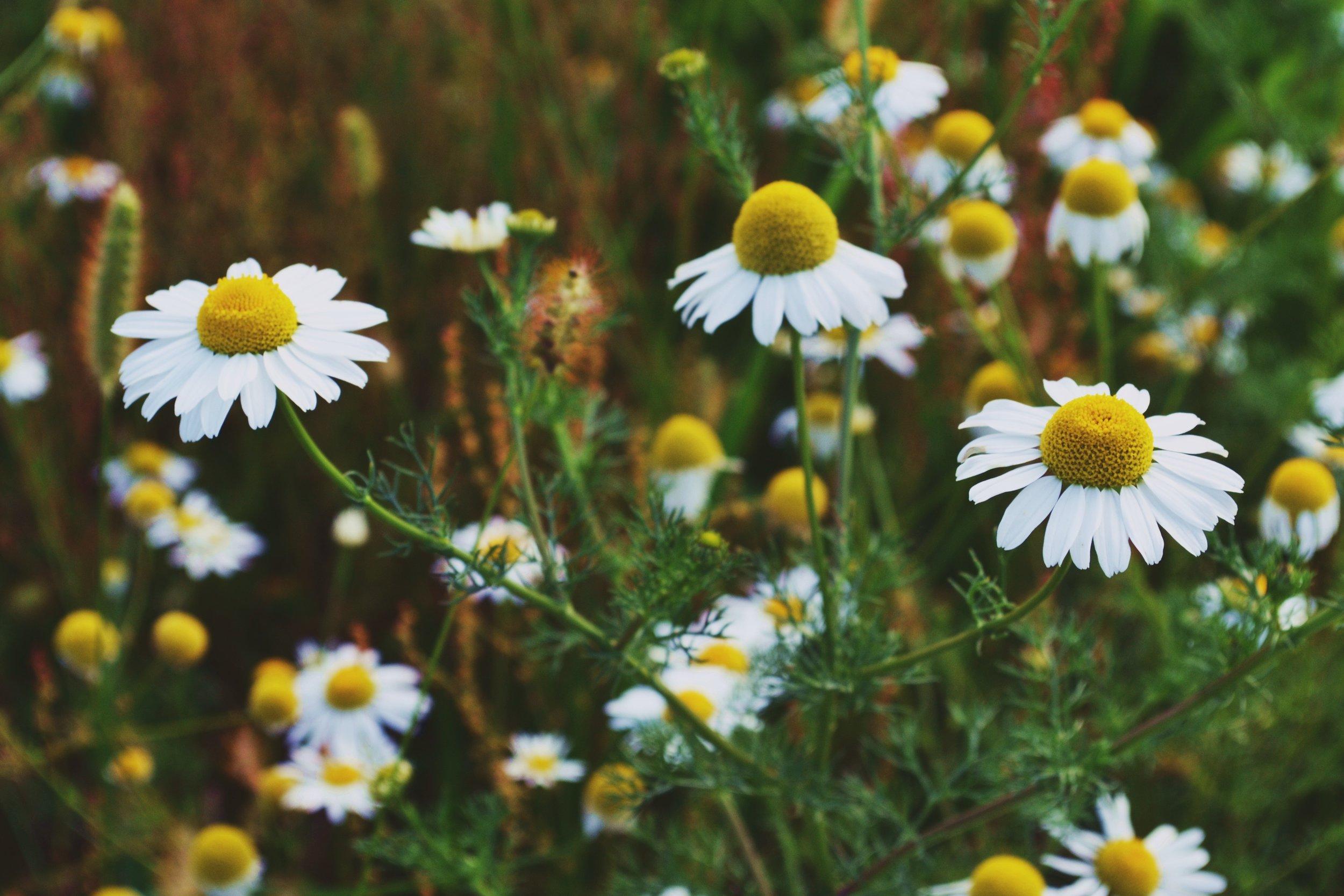Herbs for children's Ailments