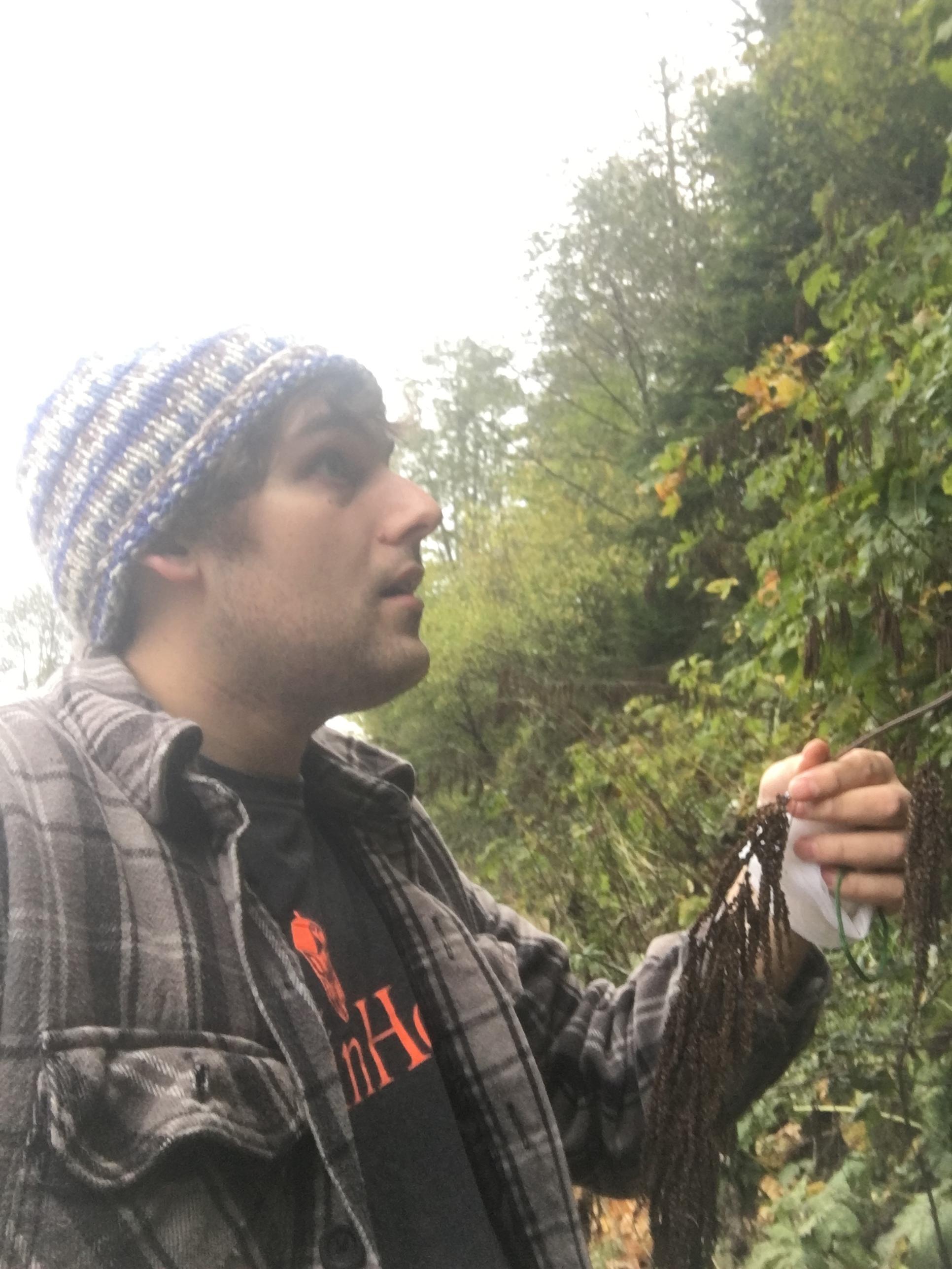 Collecting Goatsbeard (Aruncus dioicus)