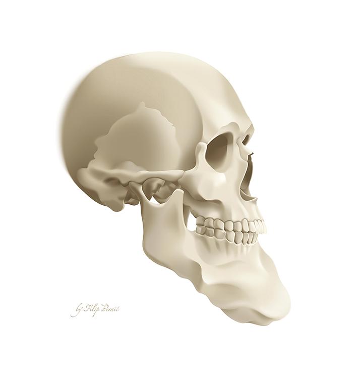 Skull 700.jpg