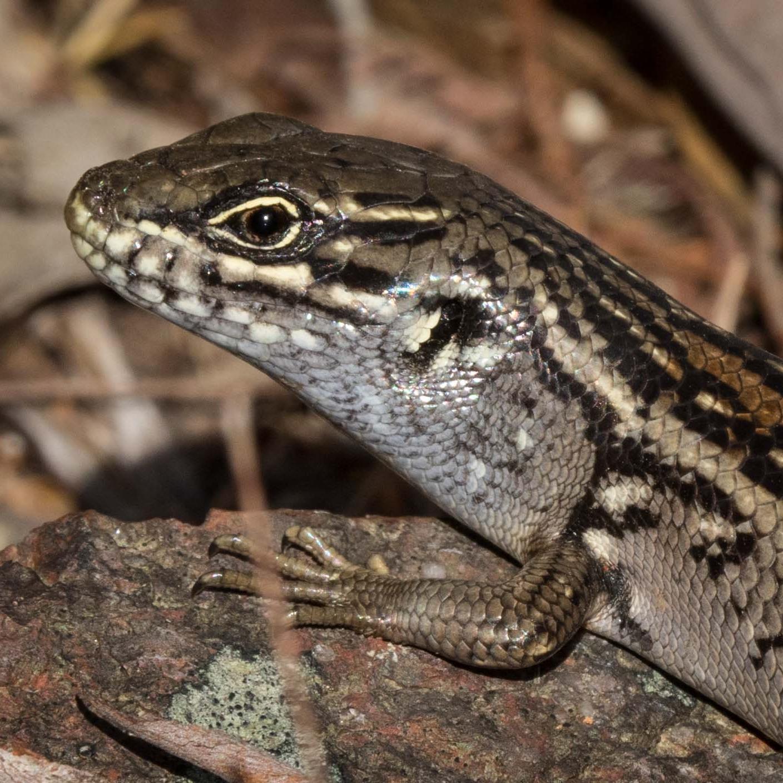 identifying vertebrates - birds, mammals, reptiles & frogs