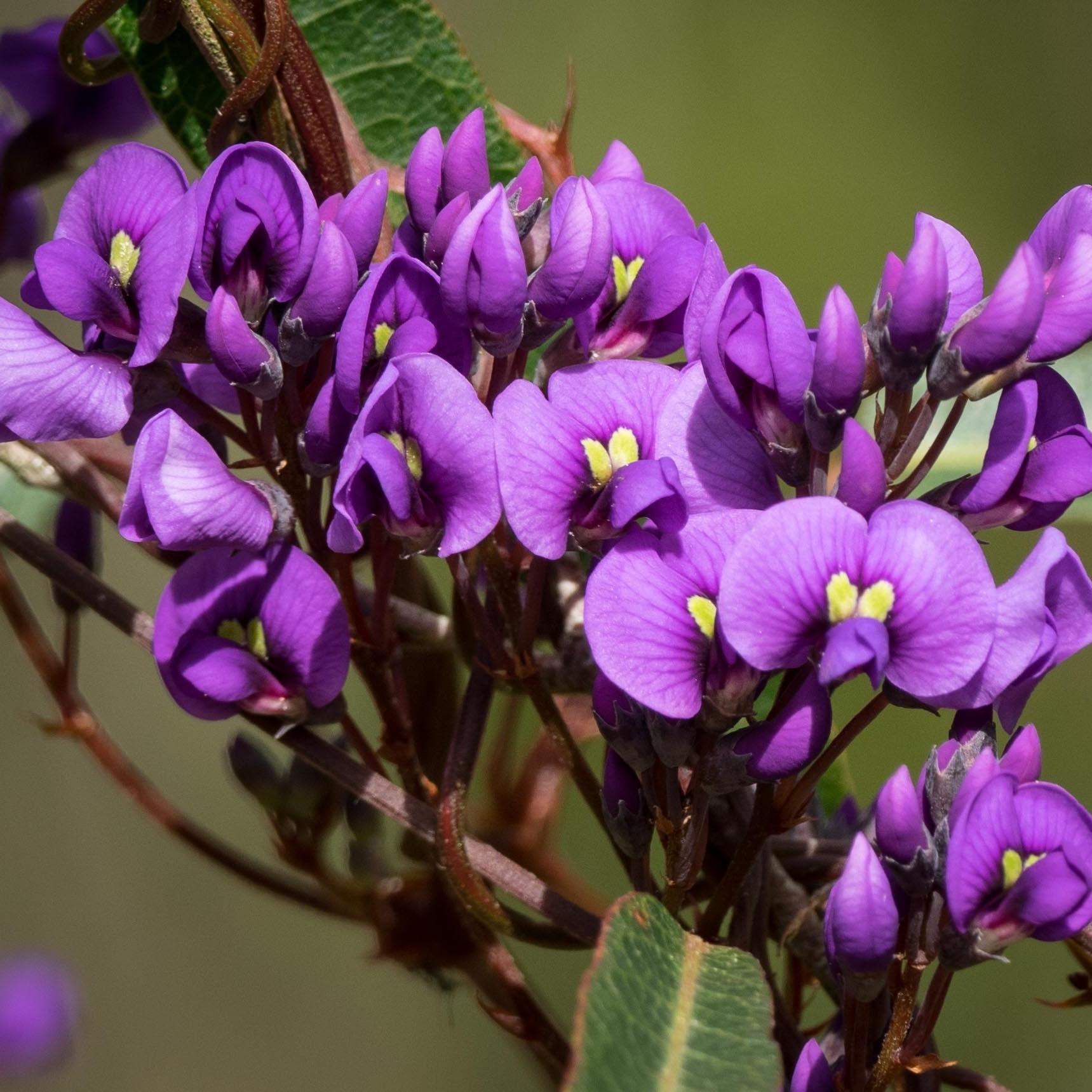 identifyingplants - flowering plants