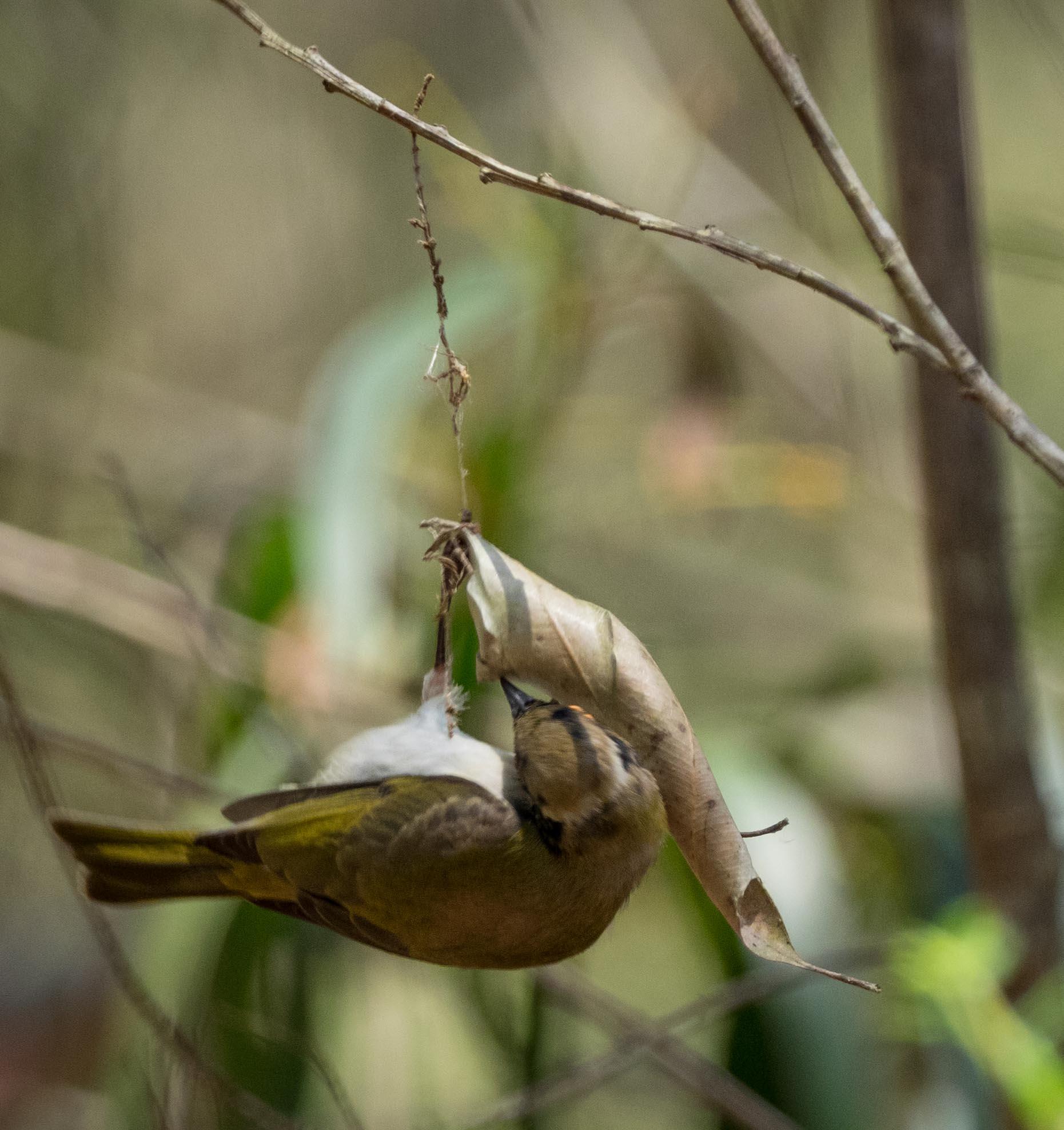 4. Unperturbed, the bird continues its attack