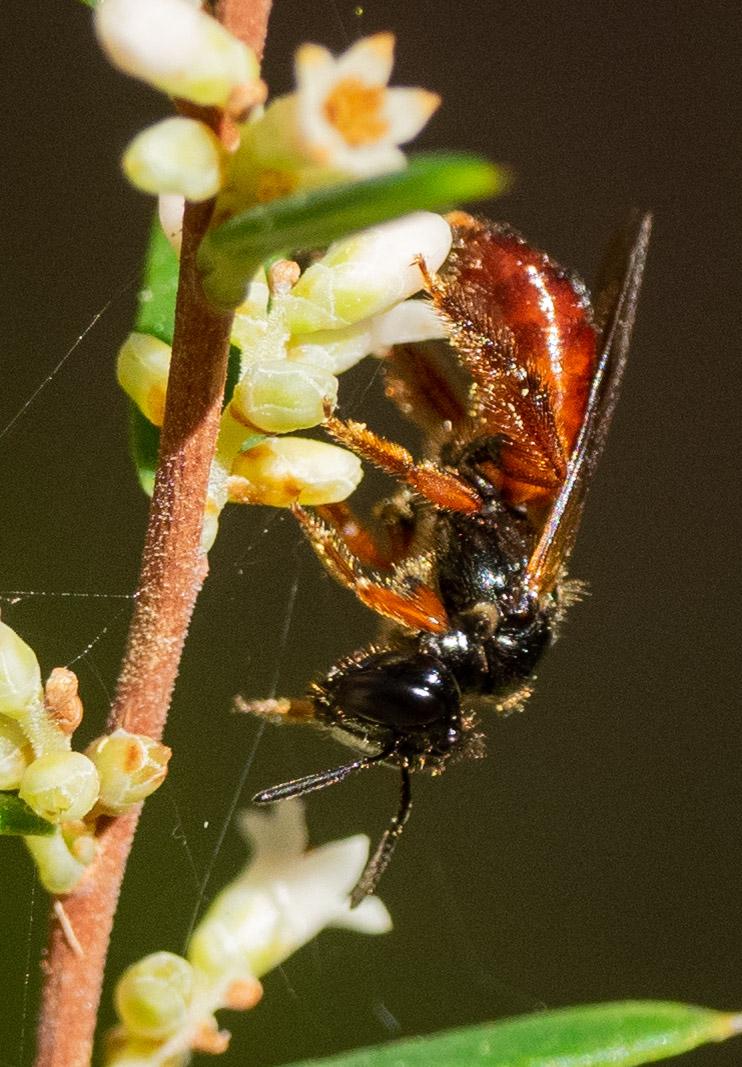 Bee ID: b