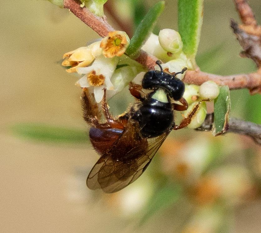 Bee ID: a