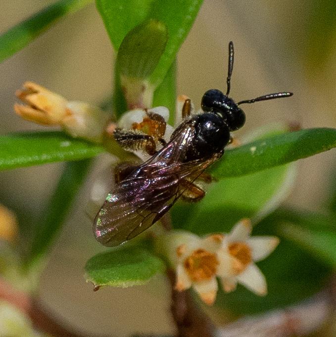Bee ID: h
