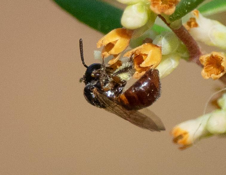 Bee ID: i