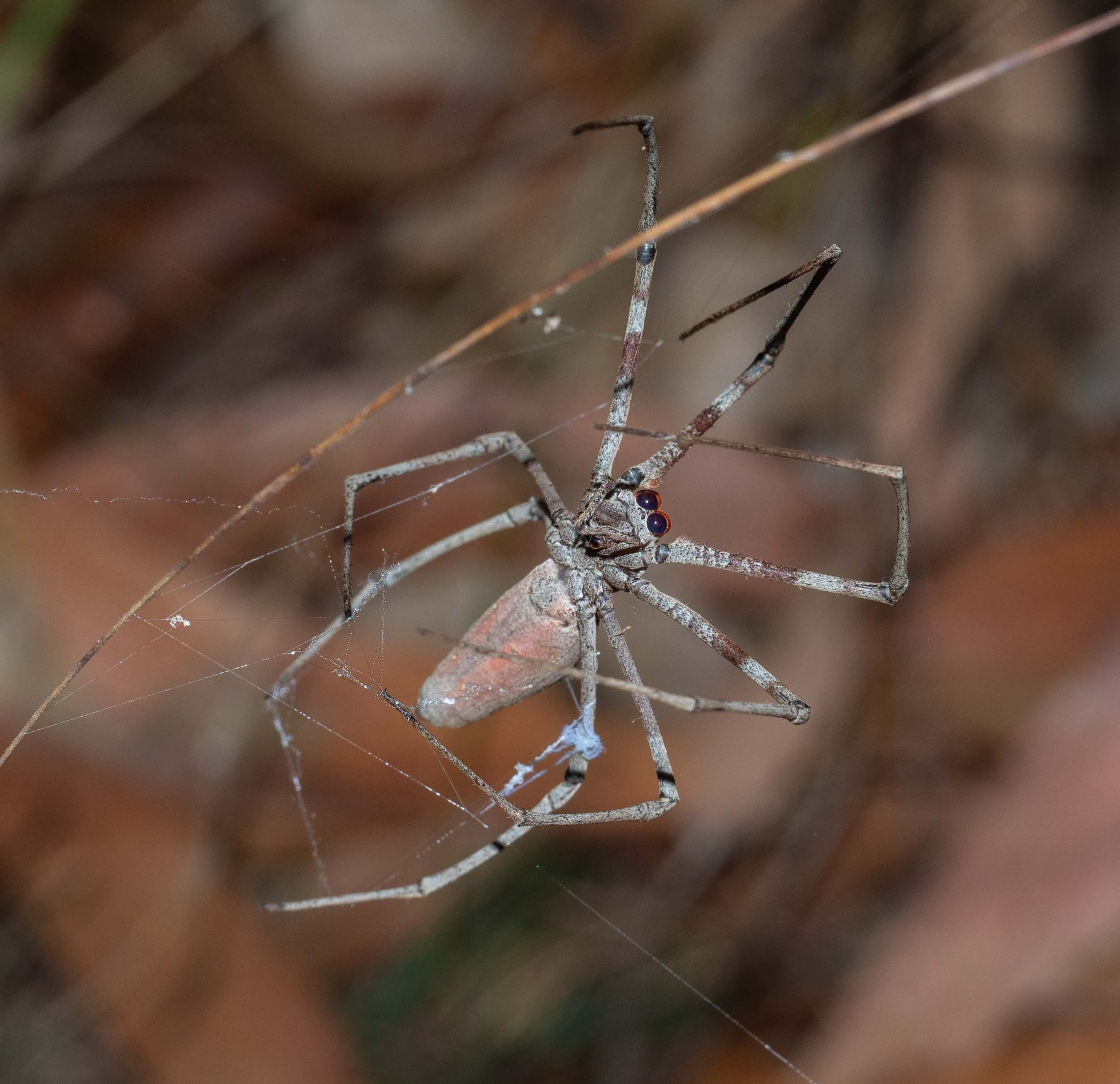 The remains of the Netcaster's net can be seen above her left-hand hind leg.
