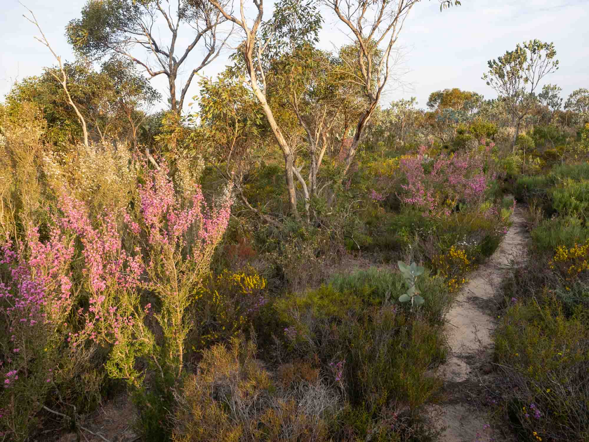 The glorious flowers alongside another of the walking tracks from our campsite at Quaalup