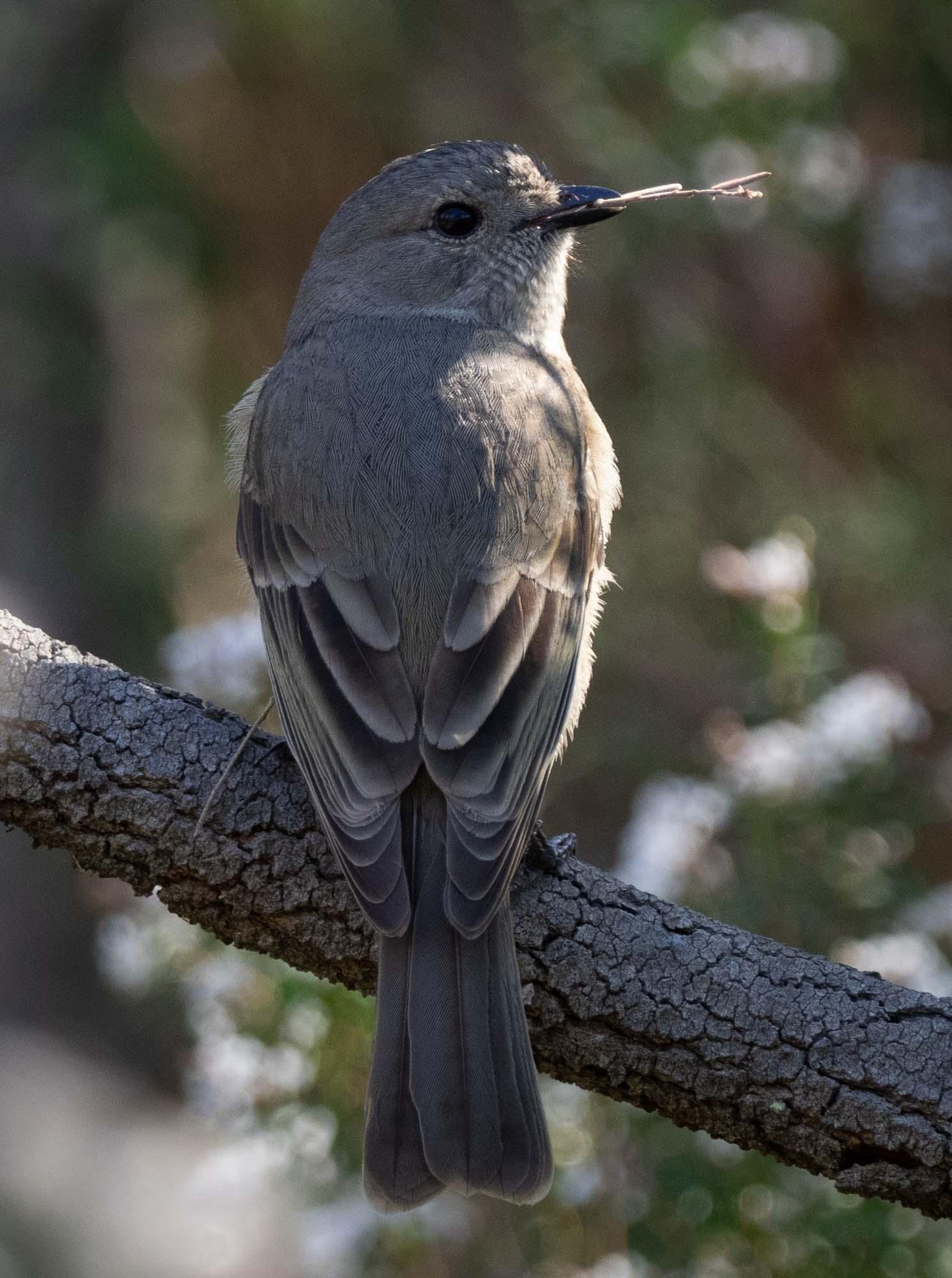 breeding birds 4.jpg