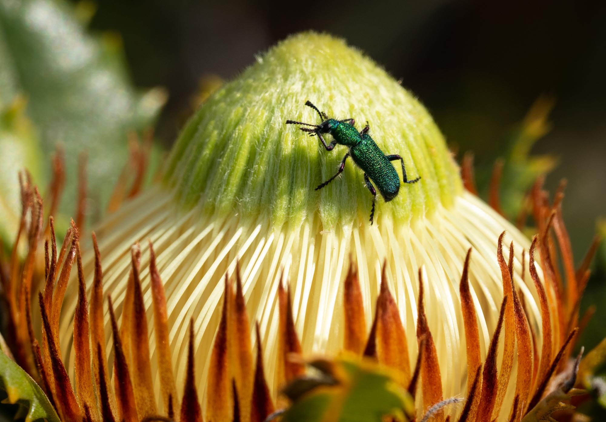 insects 9.jpg