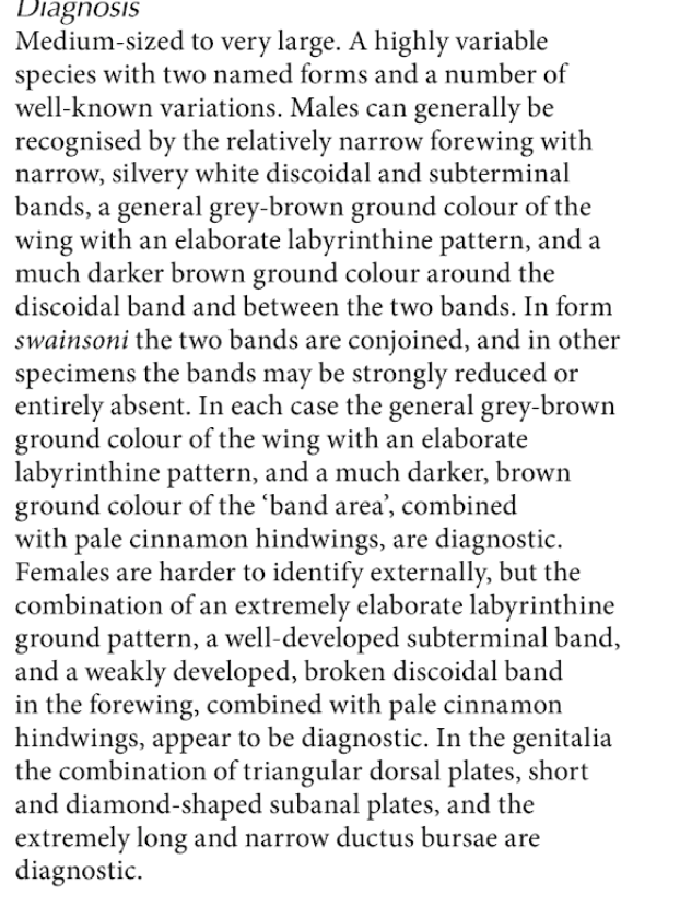 Extract from Simonsen, page 74, describing the species  Abantiades labyrinthicus