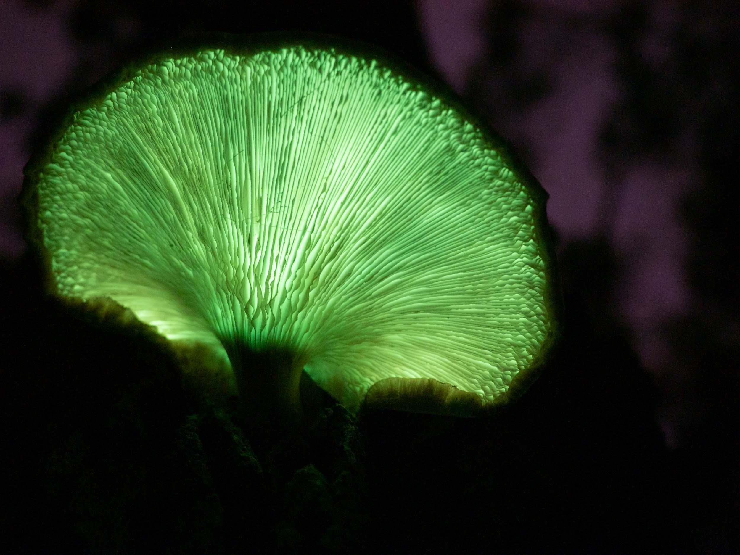 fungus light
