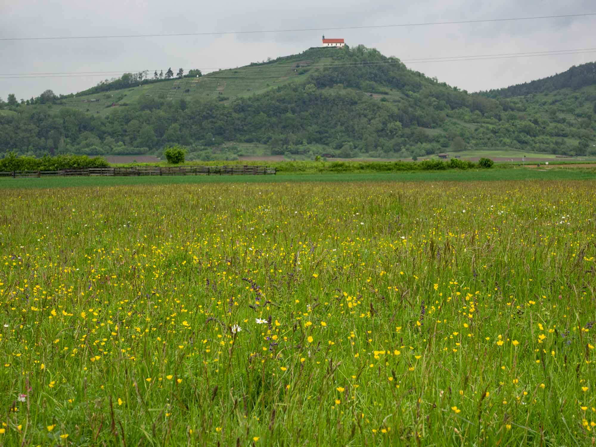 The fields show a high diversity of native vegetation. The building in the distance is Würmlingen Chapel.