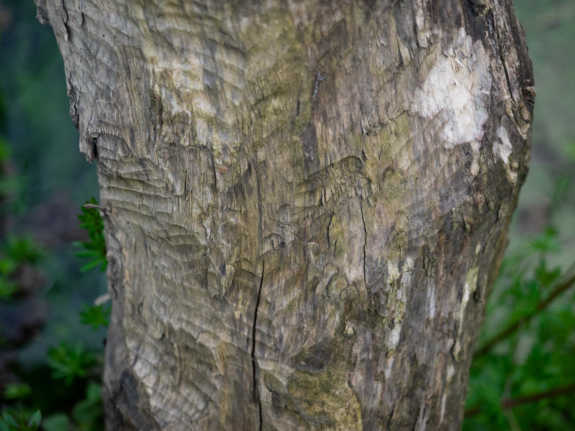 We didn't see any but beavers are known to live here - teeth marks on a tree trunk