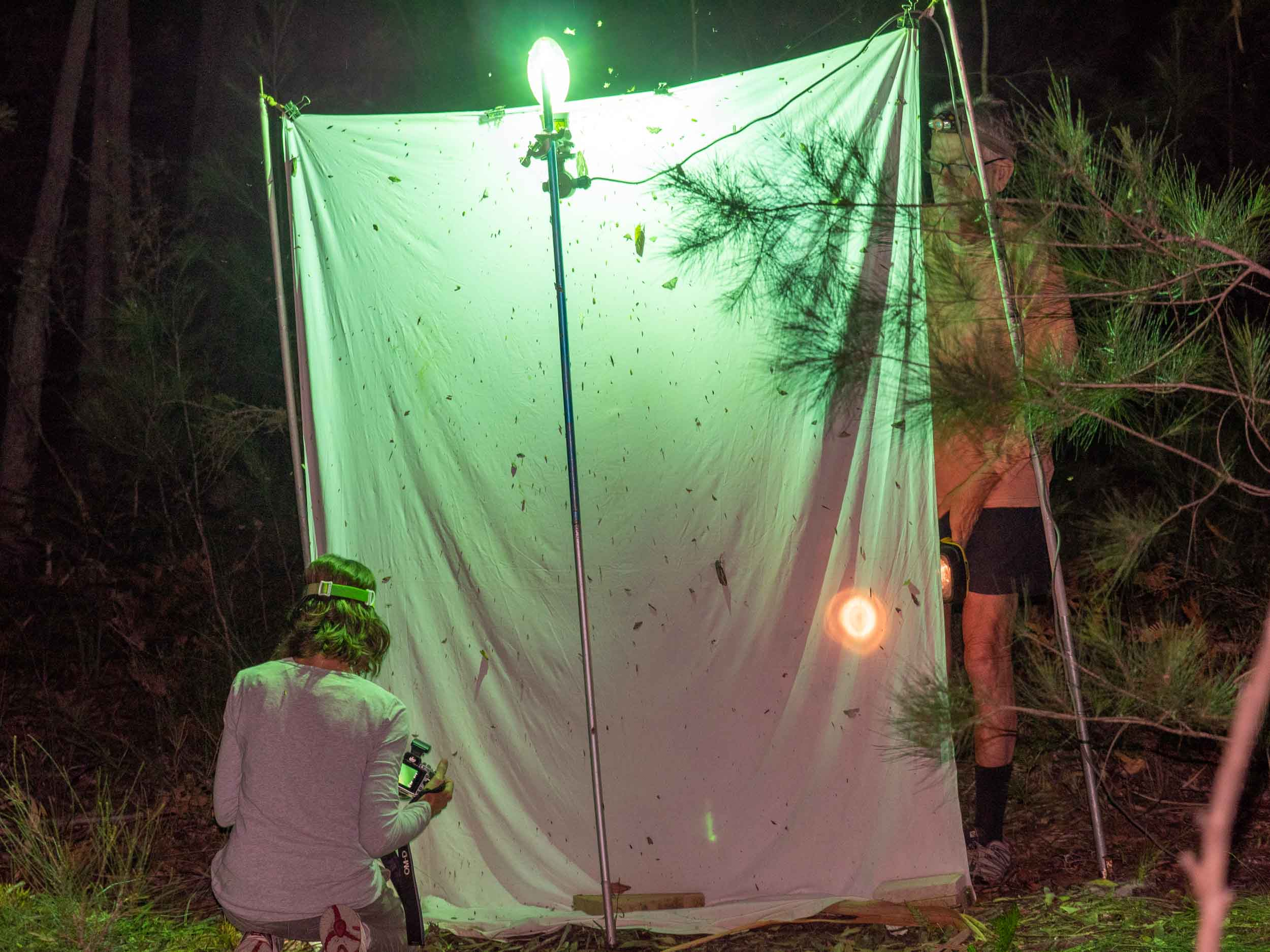 The survey site: white sheet with UV light