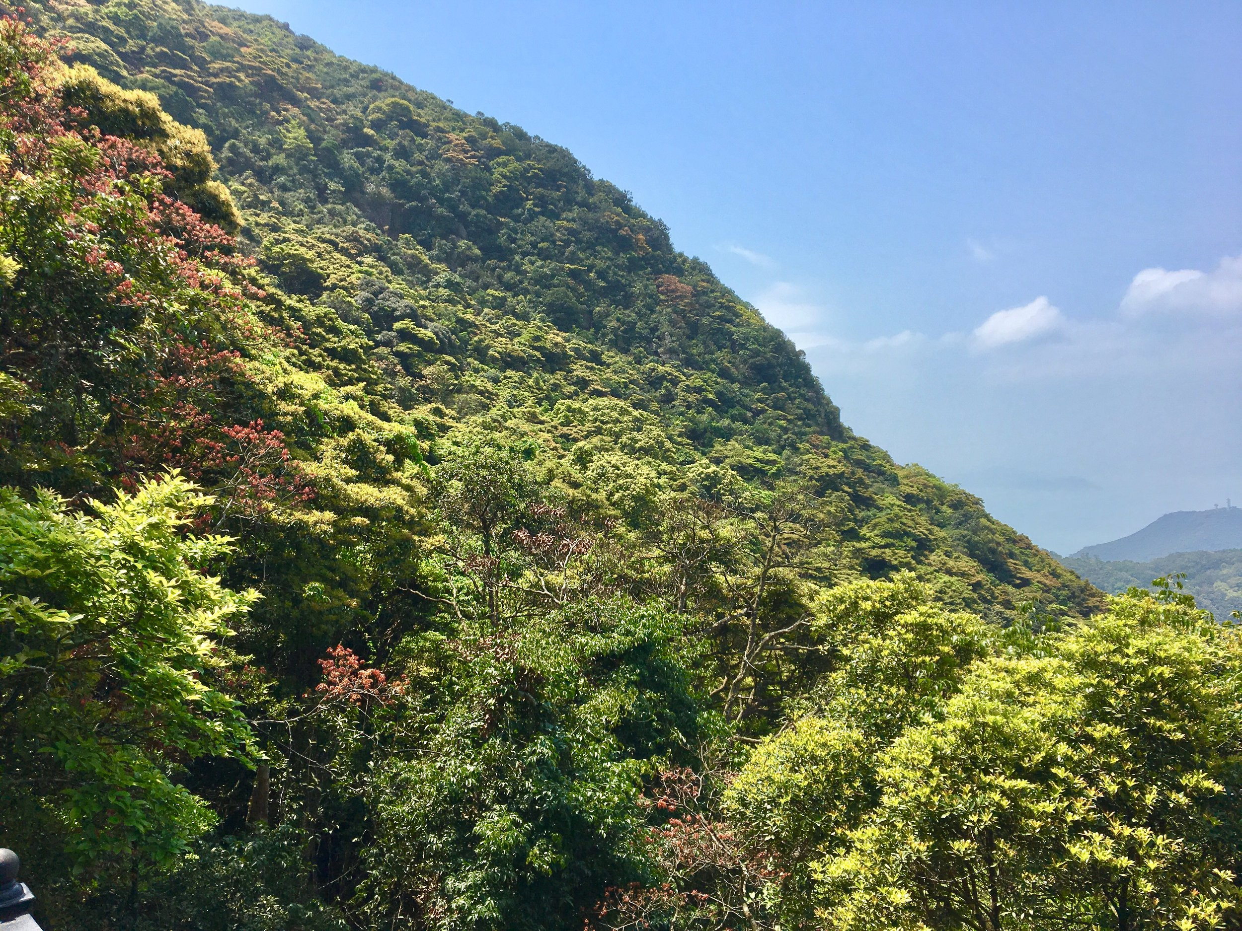 Forest Walk Atop the Peak