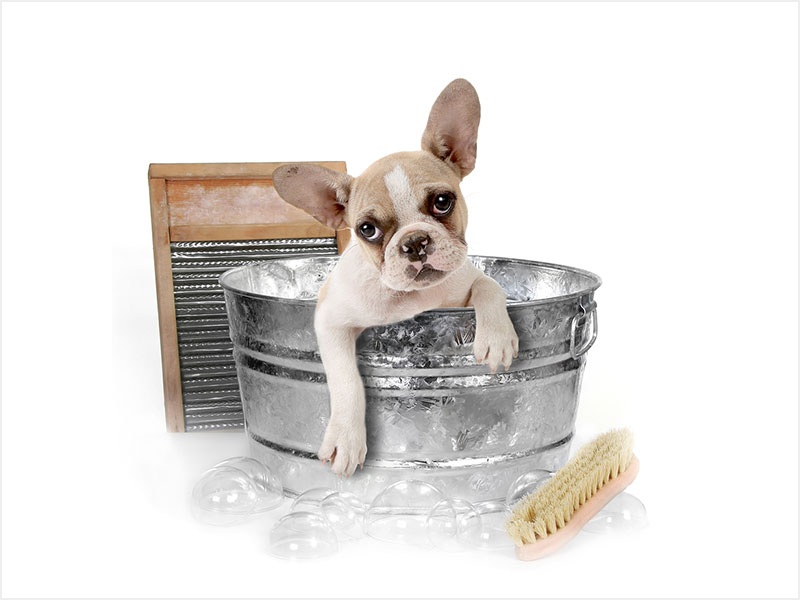 Andys-grooming-daycare-6.jpg