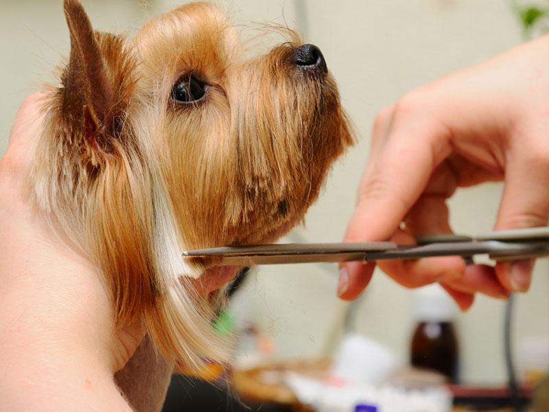 Andys-grooming-daycare-14.jpg
