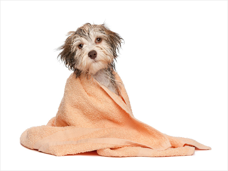 FLEA/TICK TREATMENTS - CONDITIONER $8                                               FLEA SHAMPOO $7                         HOT SPOT TREATMENT $5