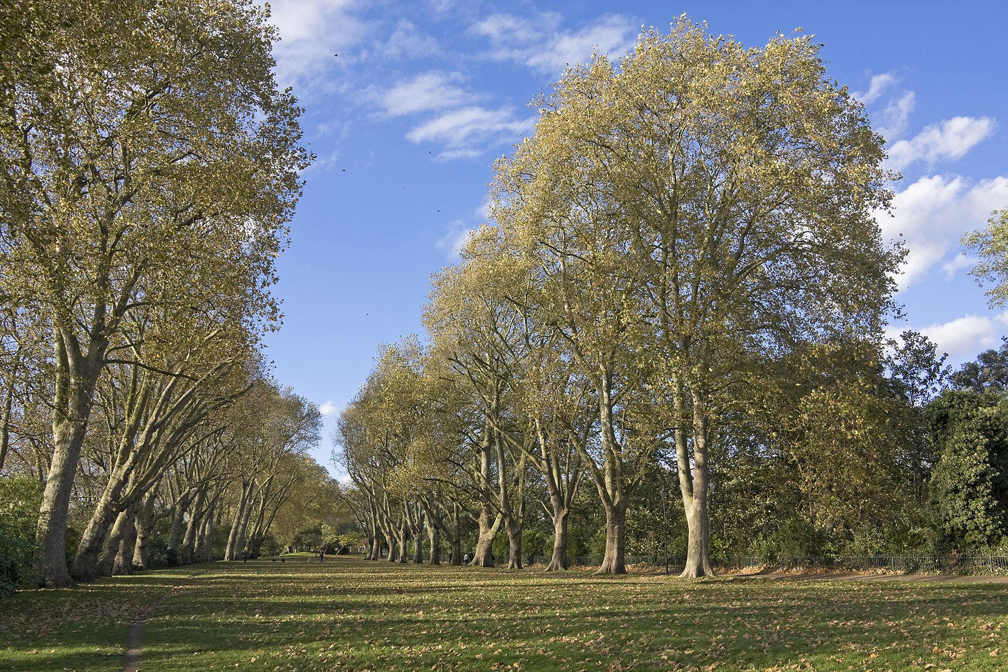 Bishops Park in autumn WR.jpg