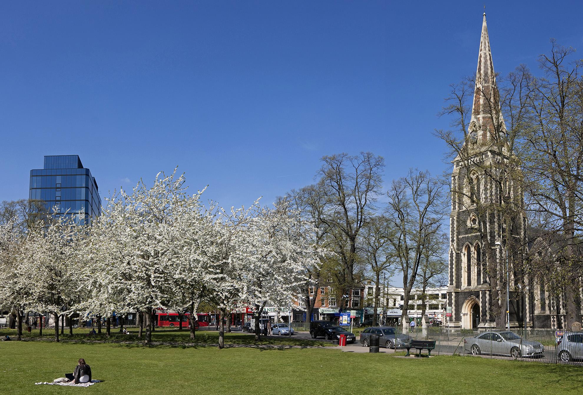 Turnham Green in Blossom.jpg