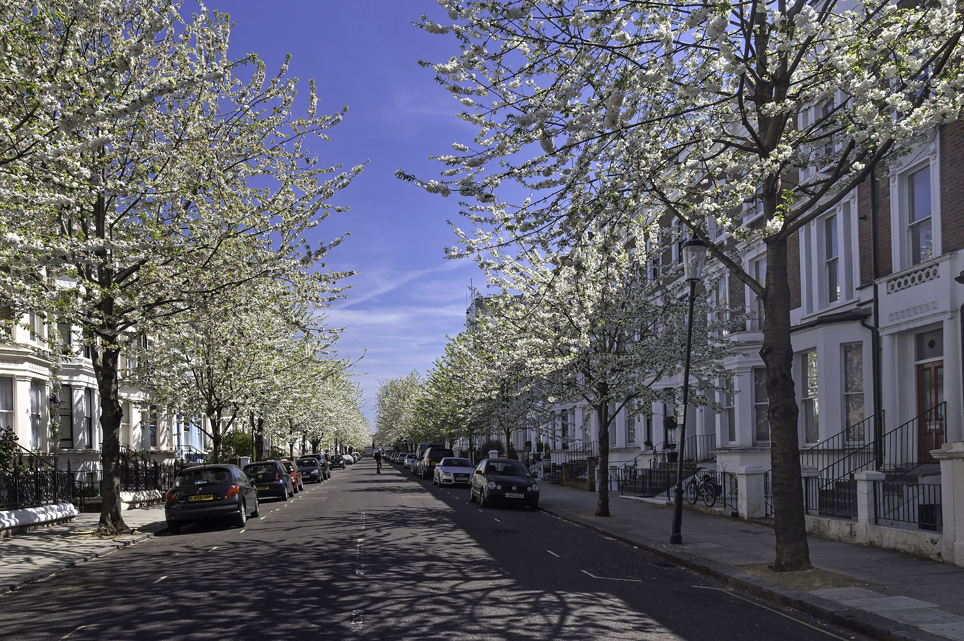 The beautiful display of blossom in Chesterton Road WR.jpg