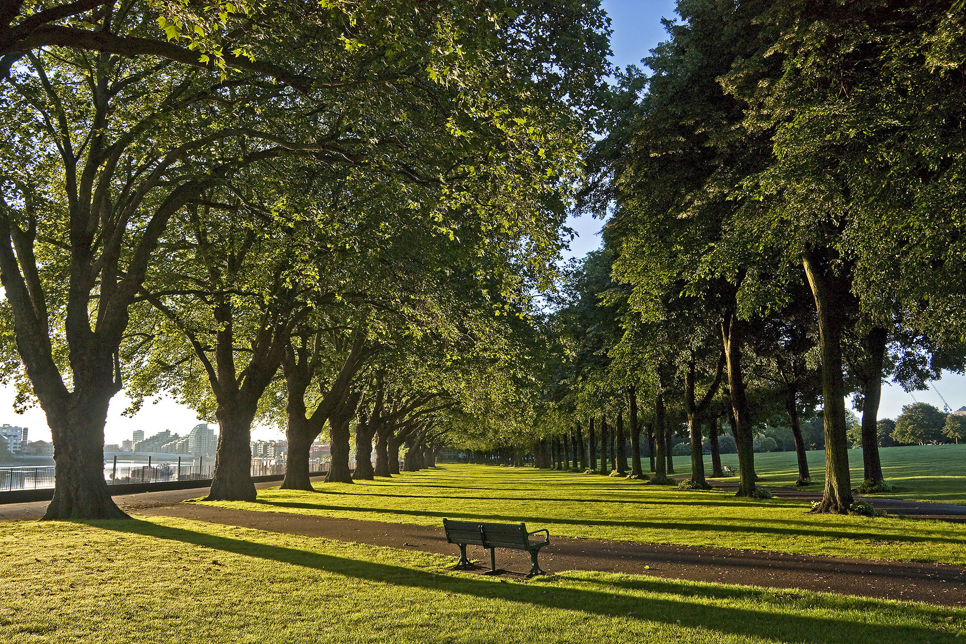 Wandsworth Park and its spectacular avenue of Plane Trees WR.jpg