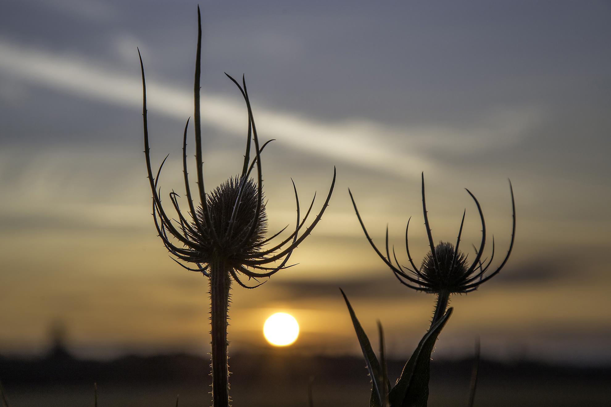 Wormwood Scrubs Sunrise WR.jpg