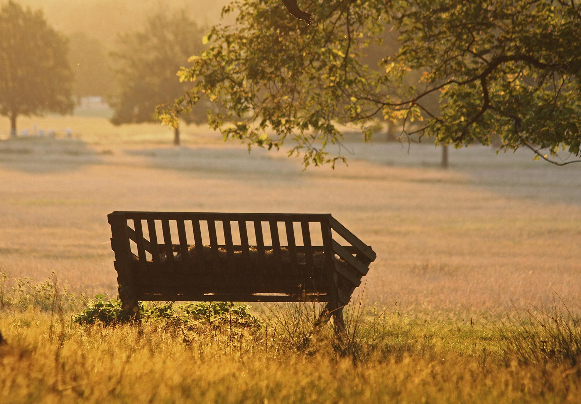 A summer's morning Richmond Park WR.jpg