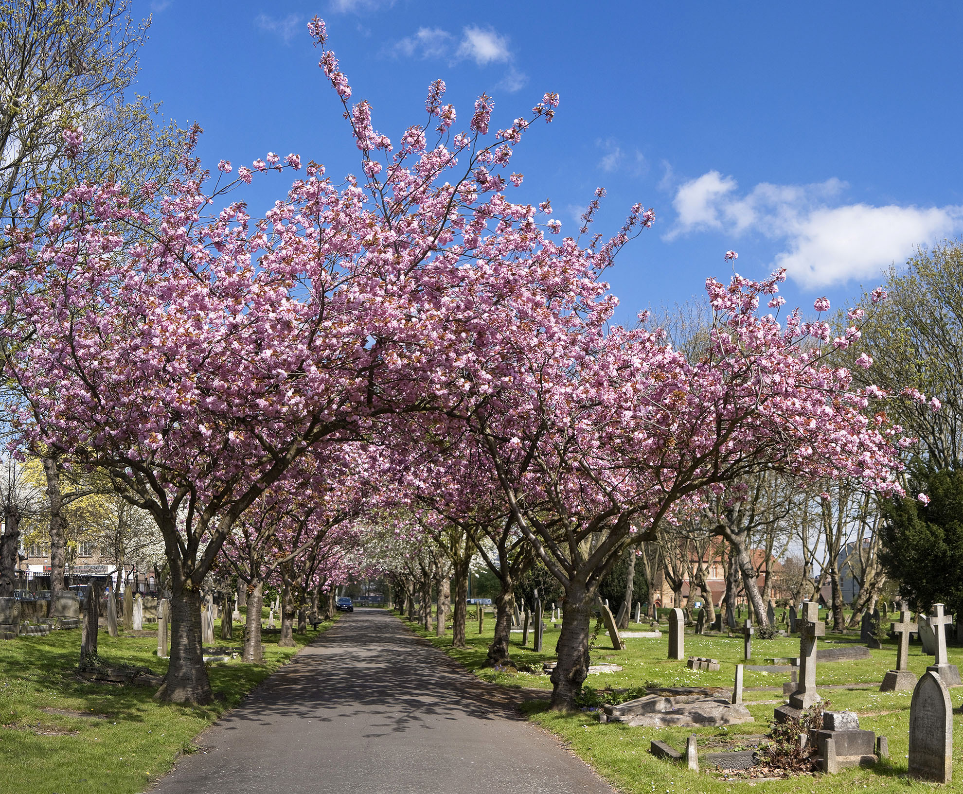 St Mary's Cemetery off Battersea Rise WR.jpg