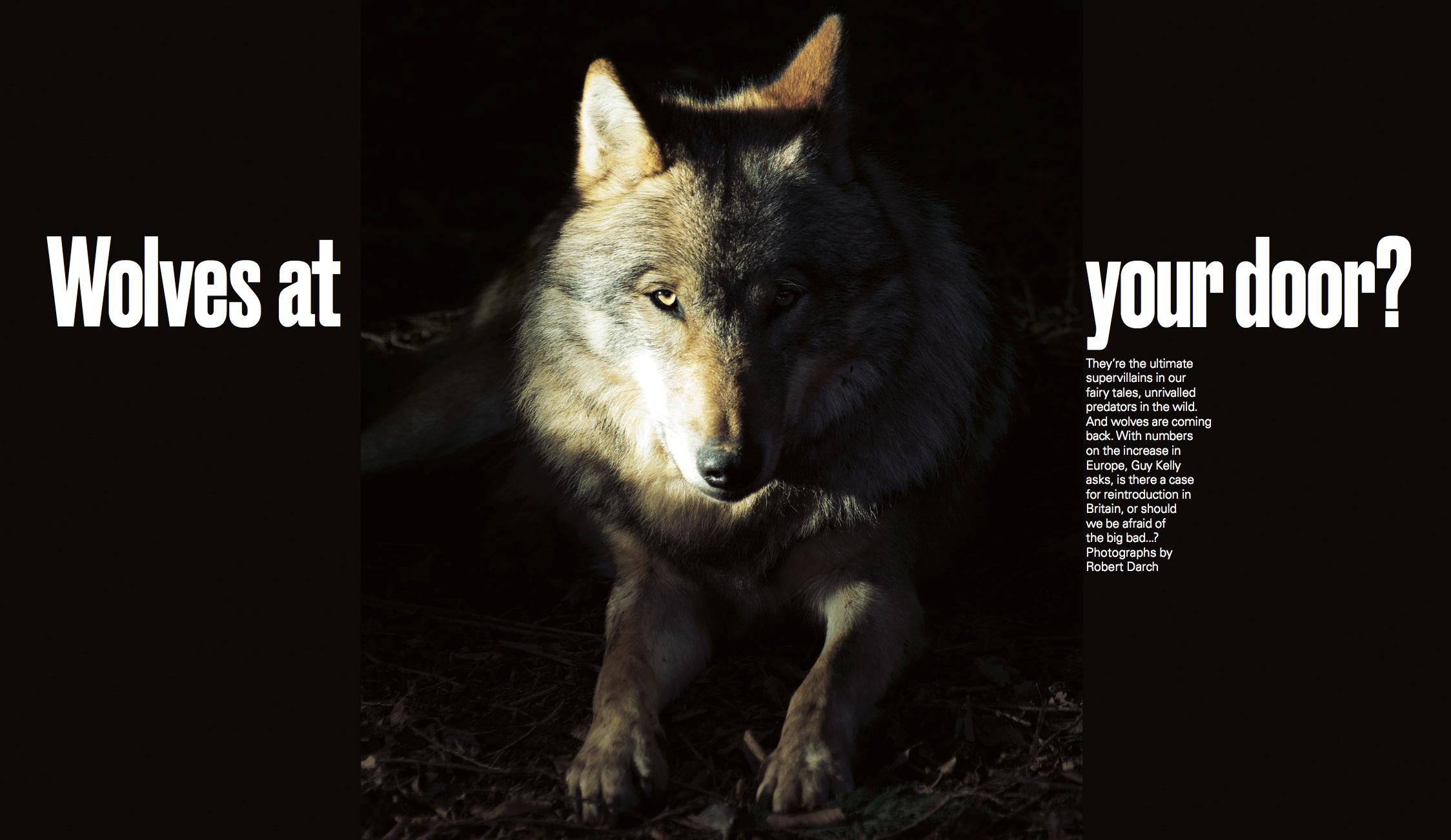 wolvesdouble.jpg