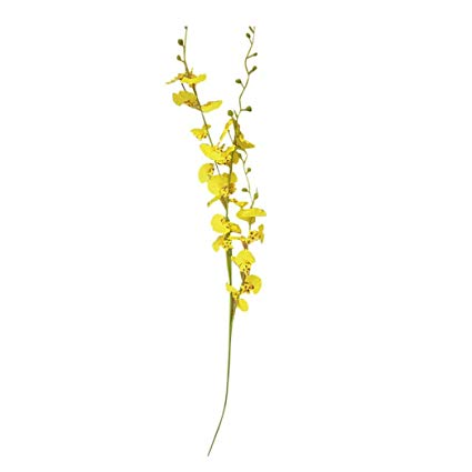 Yellow Miniature Orchid Stem (1)