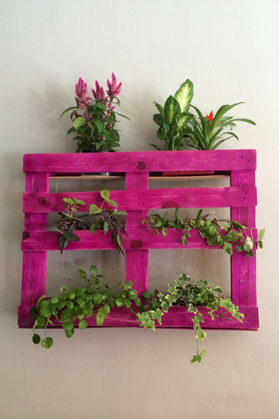 Elle Decor plants-on-pink-shelf-mounted-on-wall-at-home-royalty-free-image-677144299-1552927597.jpg