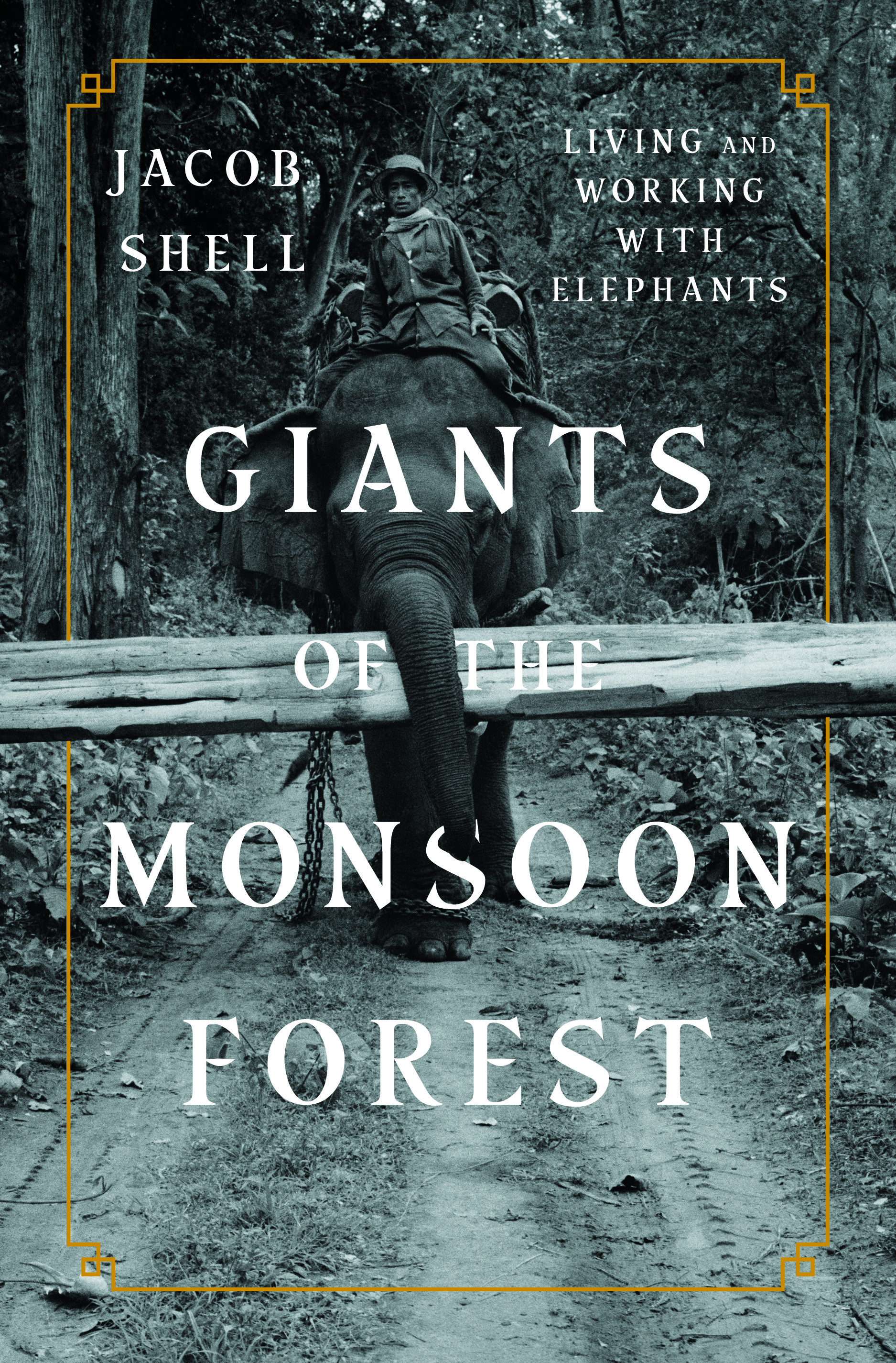 Giants of the Monsoon Forest | Jacob Shell