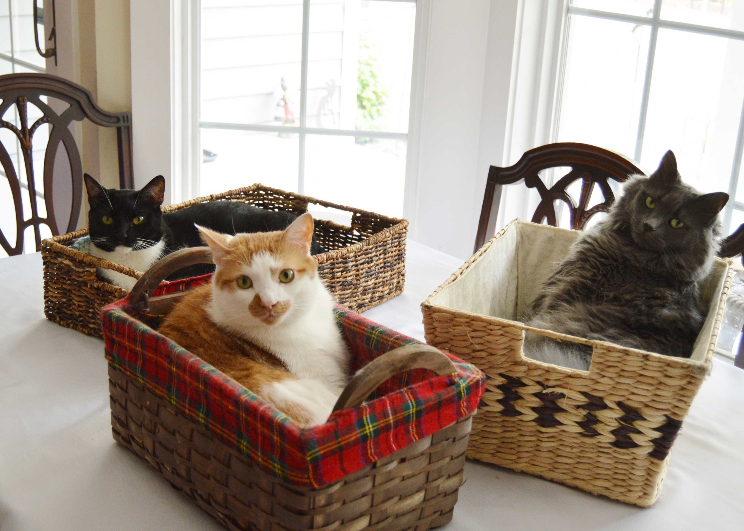 Our three cats in baskets