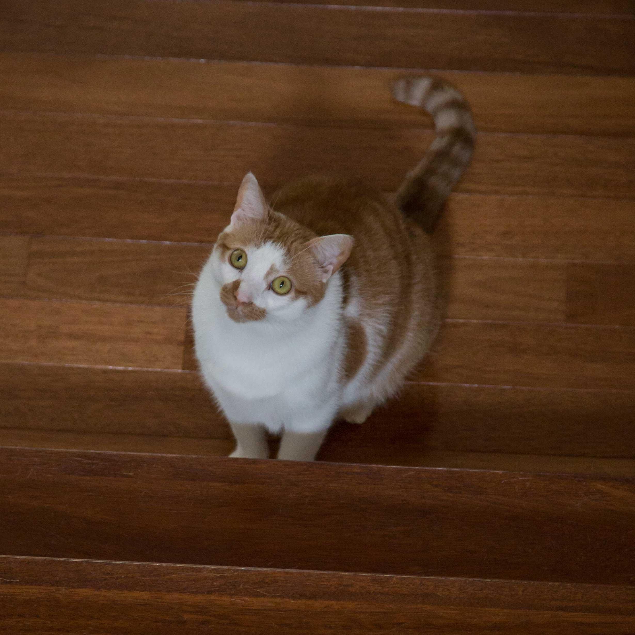 Our cat Gabriel