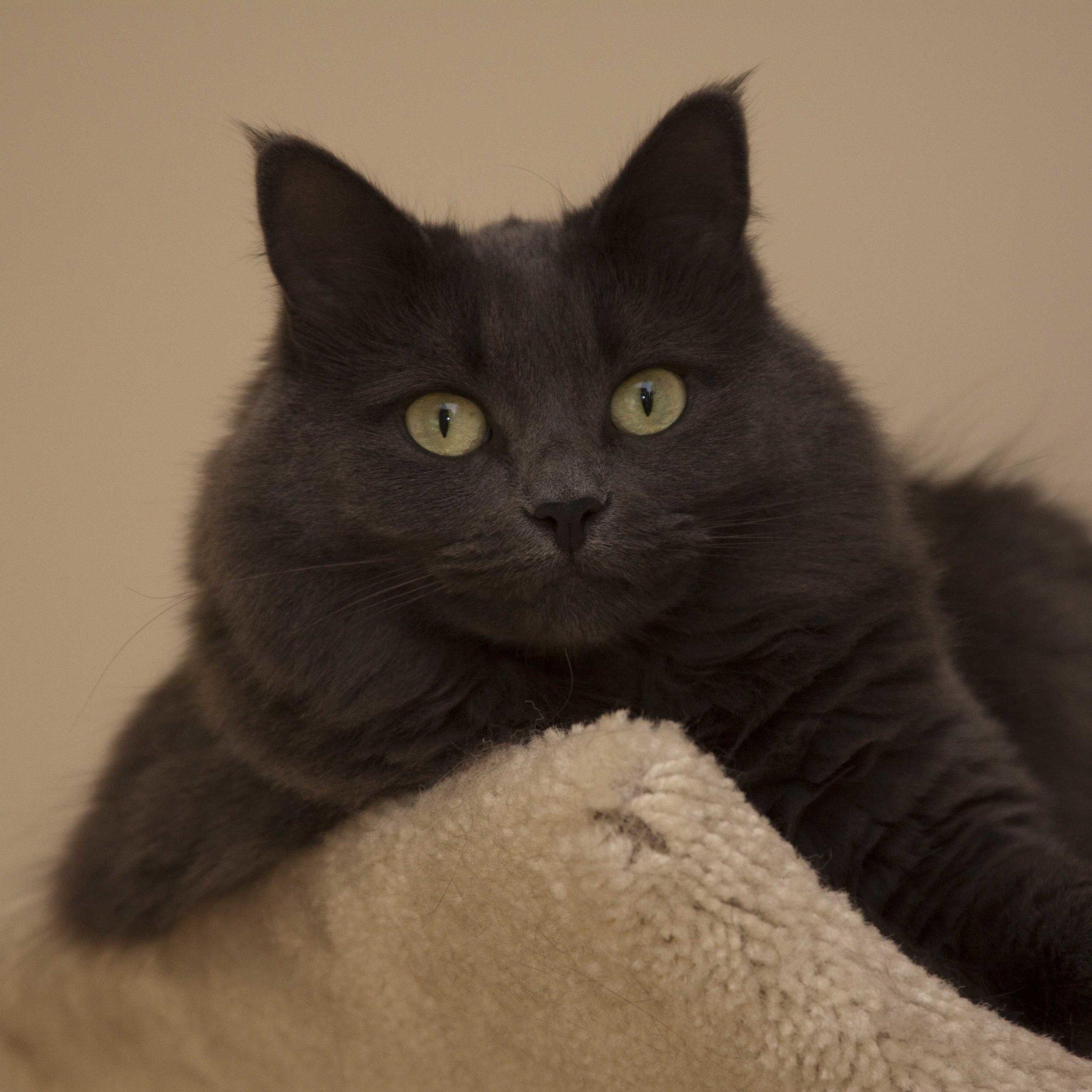 Our cat, Koshka, relaxing