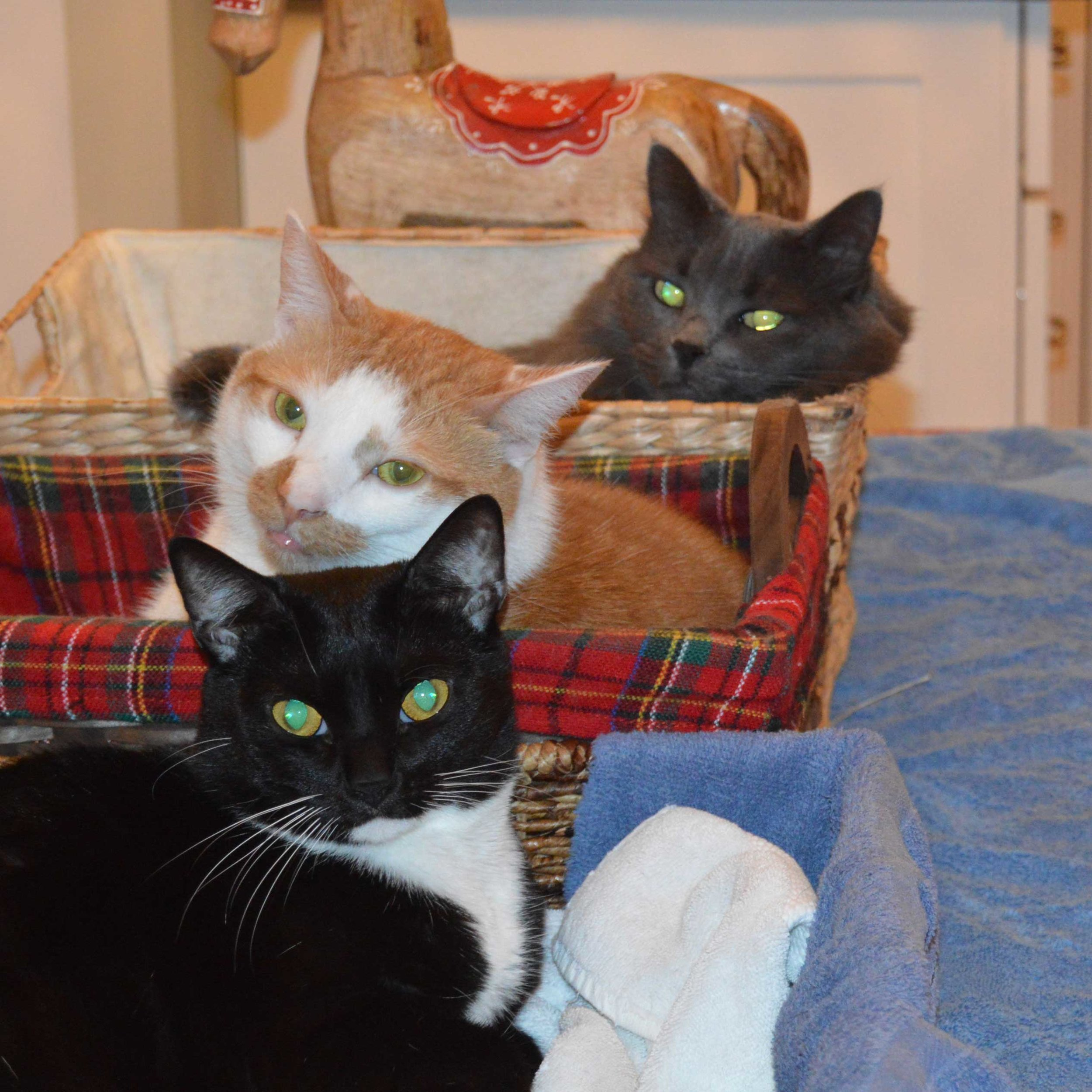 Our three cats