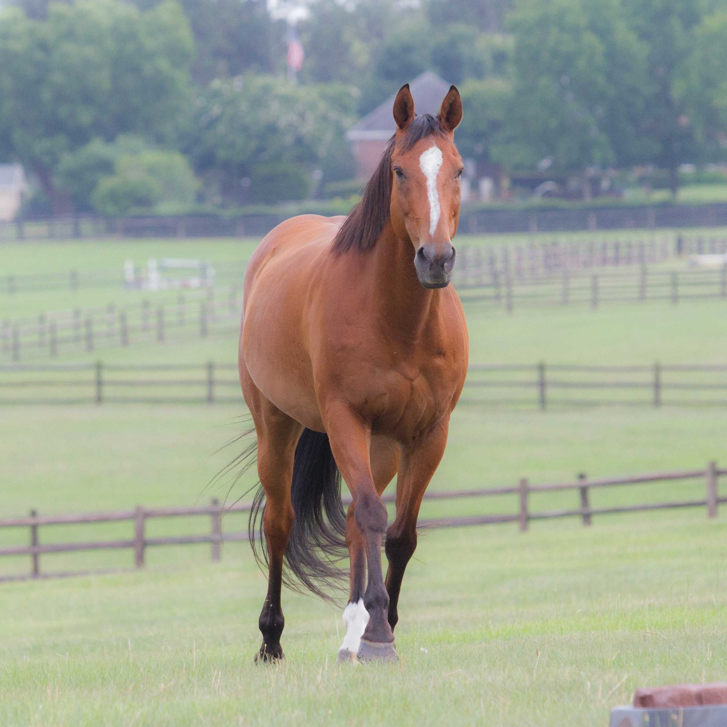 Our horse Tango running