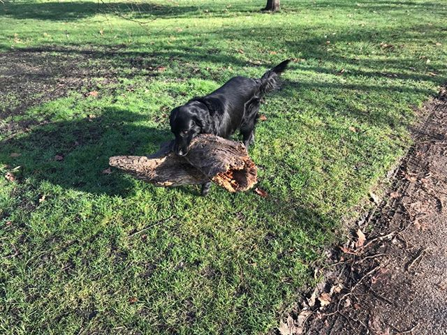 Another day another park another log but still the Beau diaries!#beau#beaudiaries#kensingtongardens#butterflyapp