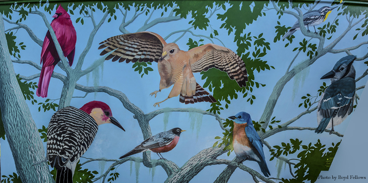 Birds Left - Right: Cardinal, Red-bellied Woodpecker, American Robin, Red-shouldered Hawk, Eastern Bluebird, Yellow-throated Warbler, and a Bluejay