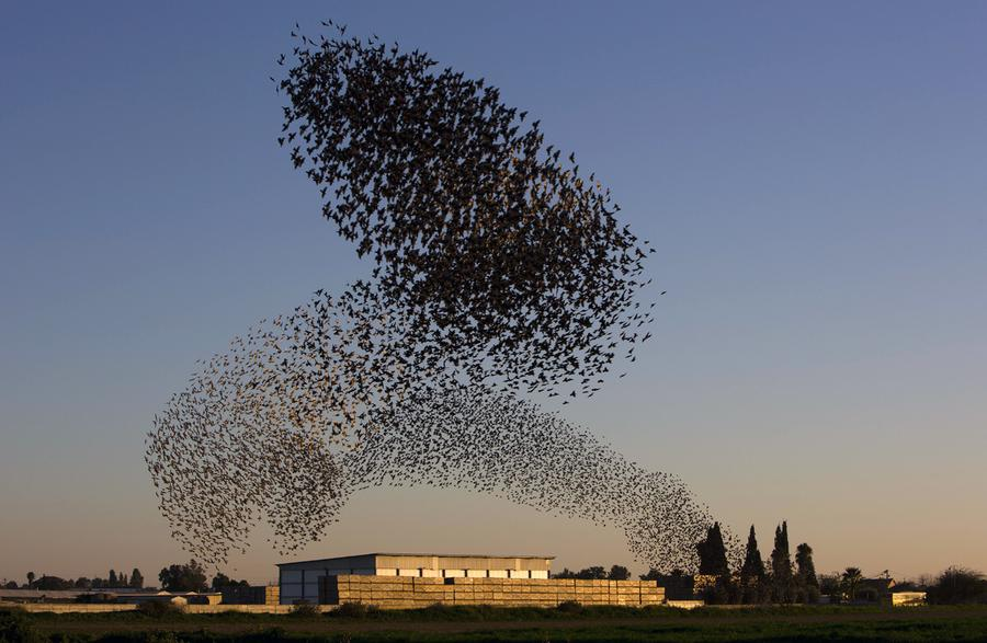 """Photo Credit: AP Photo/Oded Balilty. This was easily the 100th murmuration photo I looked at before I chose. If you ever want to fall down a rabbit hole, Google """"murmuration"""" and then ask yourself, """"Real or Photoshop?"""" over and over and over again until it's time to leave your desk."""