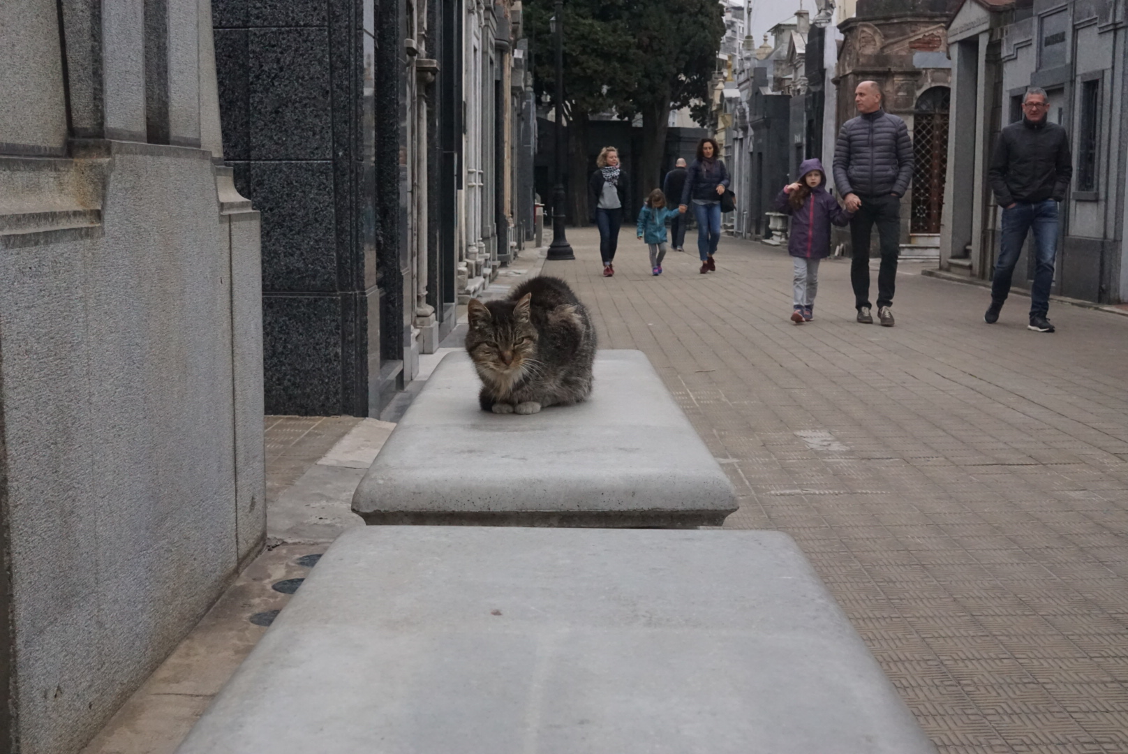 Cute cemetery kitty.