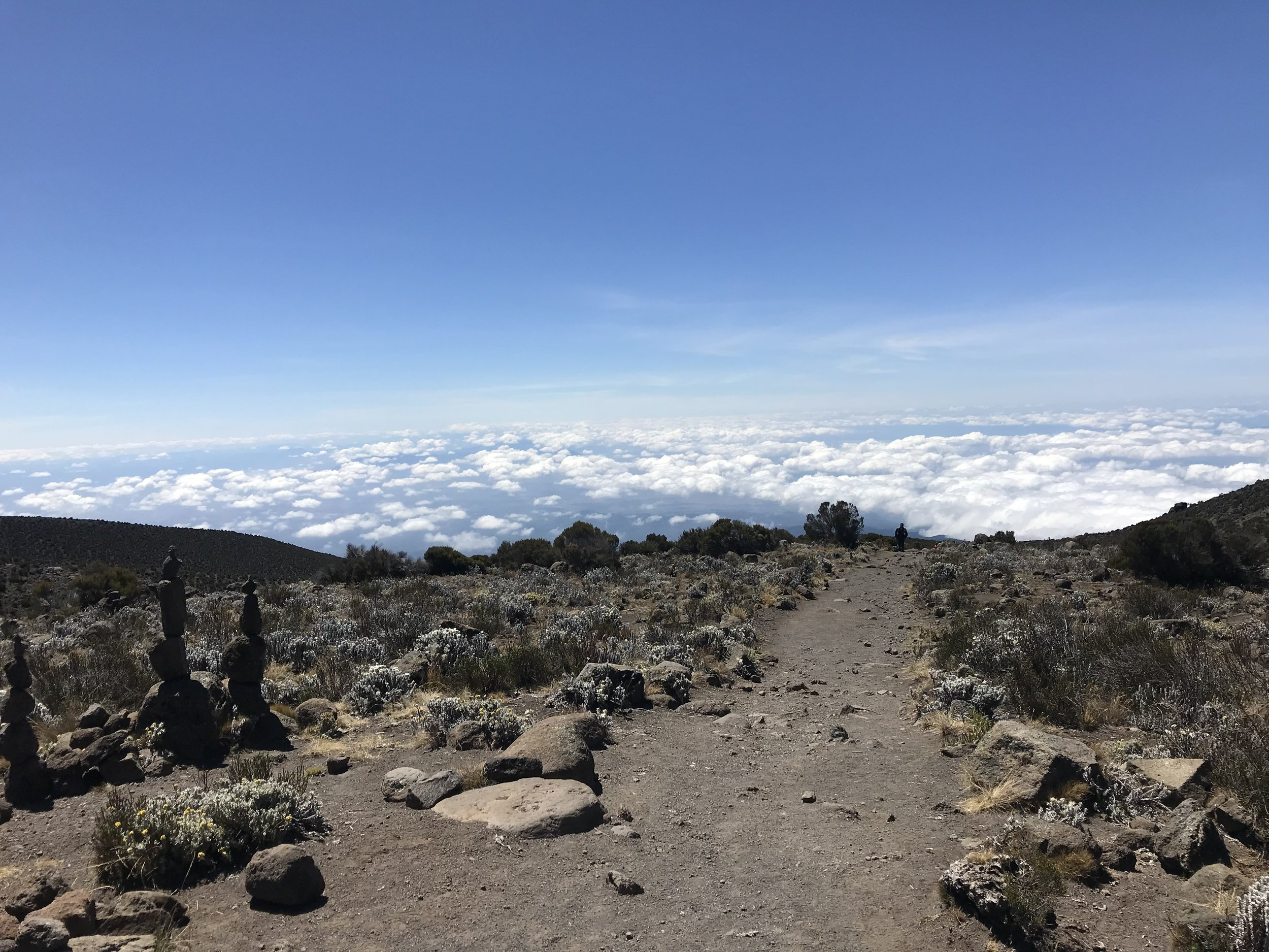 Above the clouds and above Horombo Huts.