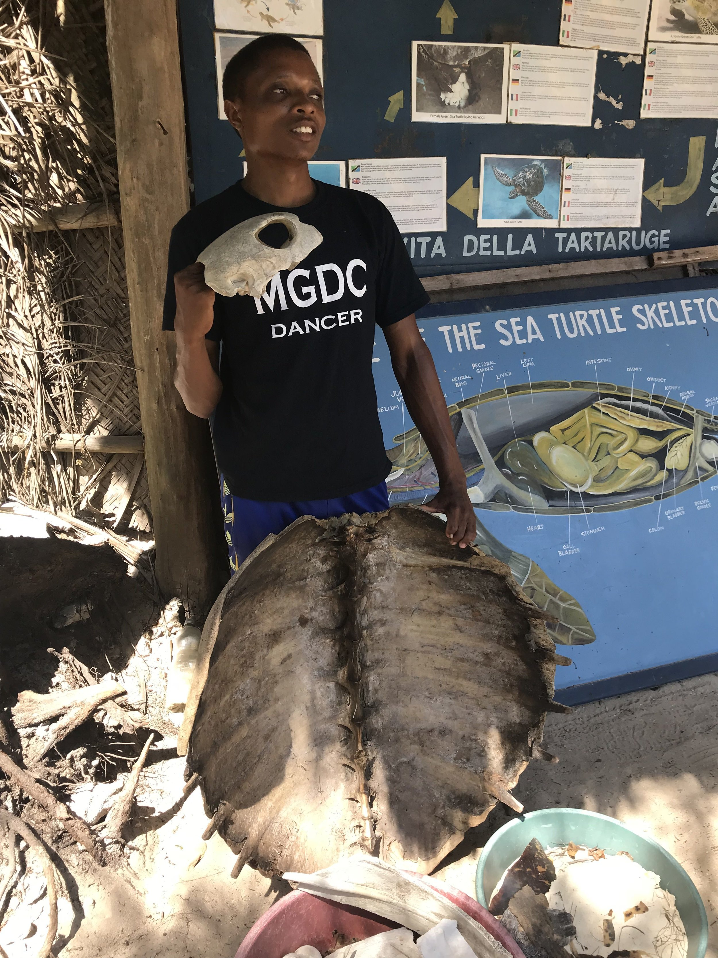 Our turtle sanctuary guide with a giant turtle shell (died from natural causes).