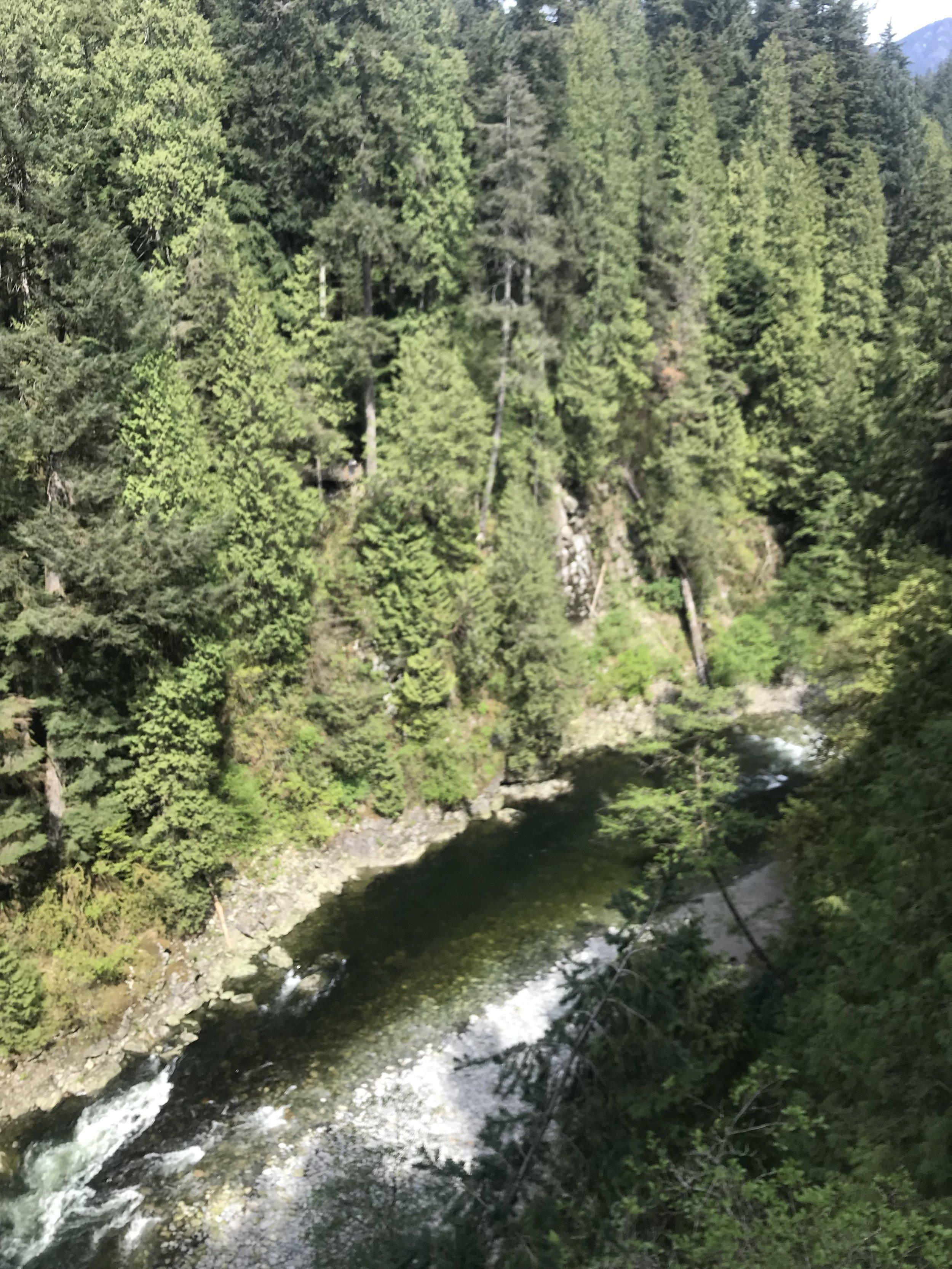 The Capilano River below.
