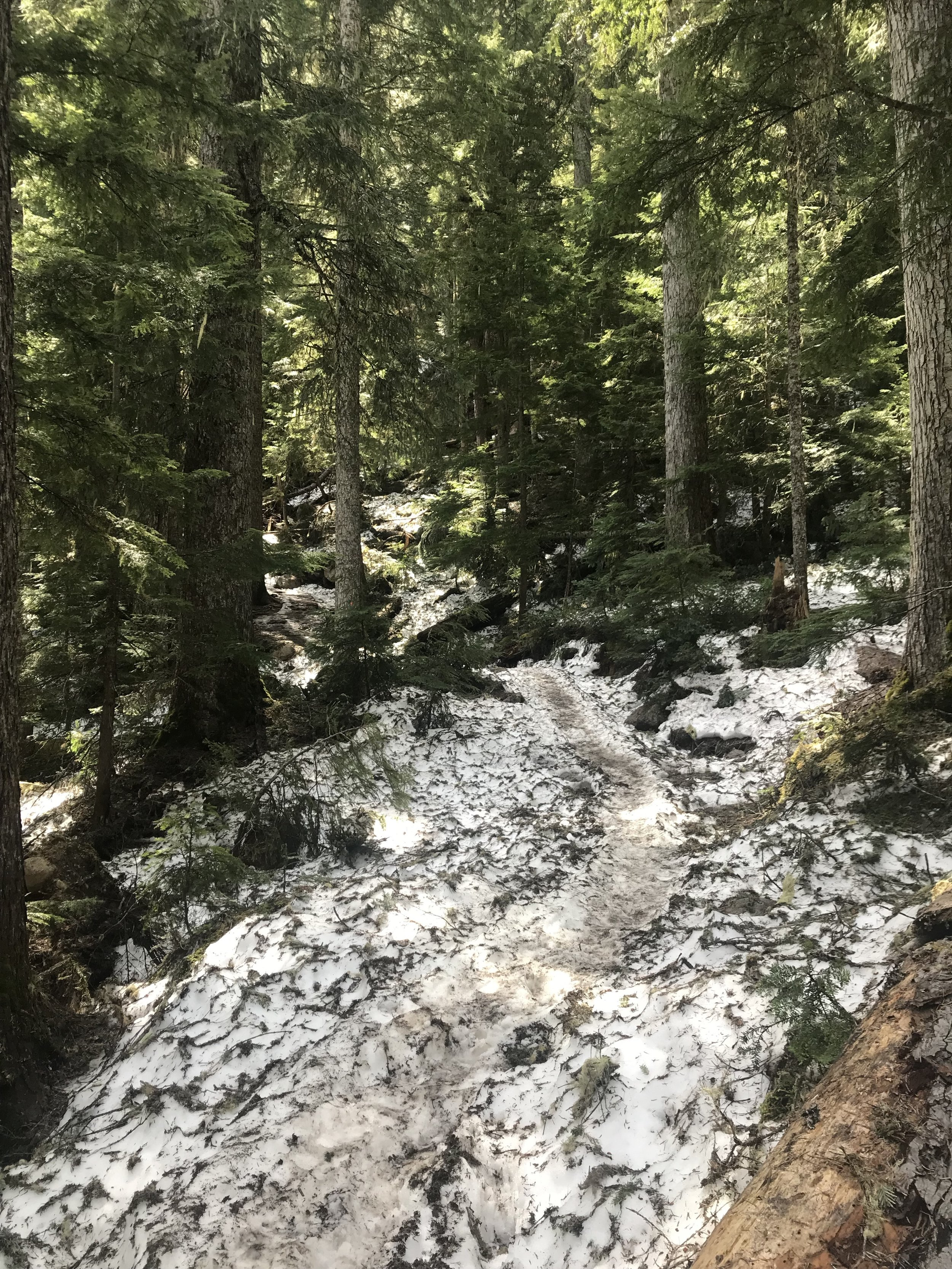 A more tame part of the snow-packed trail.