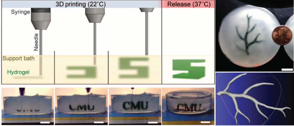 Figure 1: (adapted from (1)) Left: The FRESH Printing process involves printing a hydrogel such as collagen or alginate into FRESH support material, then washed the material away by heating the printed structure to 37 °C. Right: A model of a section of a human right coronary arterial tree from 3D MRI is processed at full scale into machine code for FRESH printing. An example of the arterial tree printed in alginate (black) and embedded in the gelatin slurry support bath