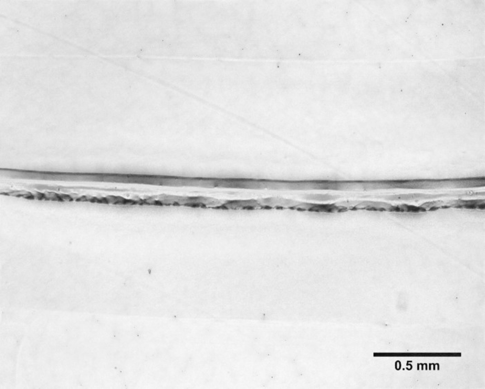 Figure 3: Bioprinted Alginate with the FRESH method is able to achieve a resolution of 0.15 +/- 0.03 mm.